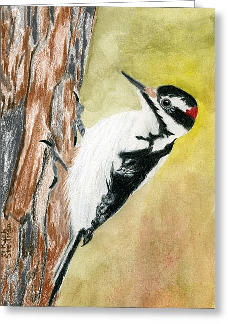 Harry The Hairy Woodpecker Greeting Card