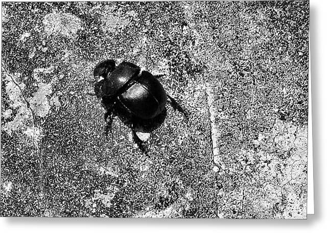 Harsh Life Black White Life Is Dung Beetle Card Greeting Card by Kathy Daxon
