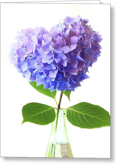 Hart Shape Hydrangea Greeting Card