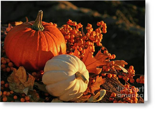 Gourds Greeting Cards - Harvest colors Greeting Card by Sandra Cunningham
