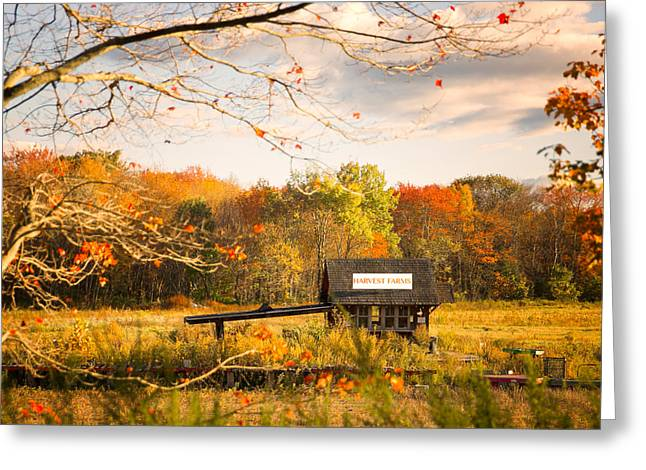 Harvest Farmstand Greeting Card