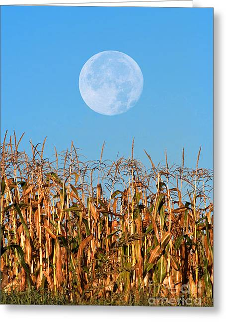 Harvest Moon Over Corn Field Greeting Card