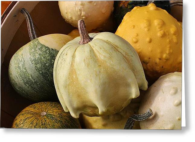 Harvest Of Gourds Greeting Card by Bruce Bley