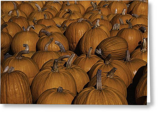 Harvest Pumpkins Greeting Card by Garry Gay