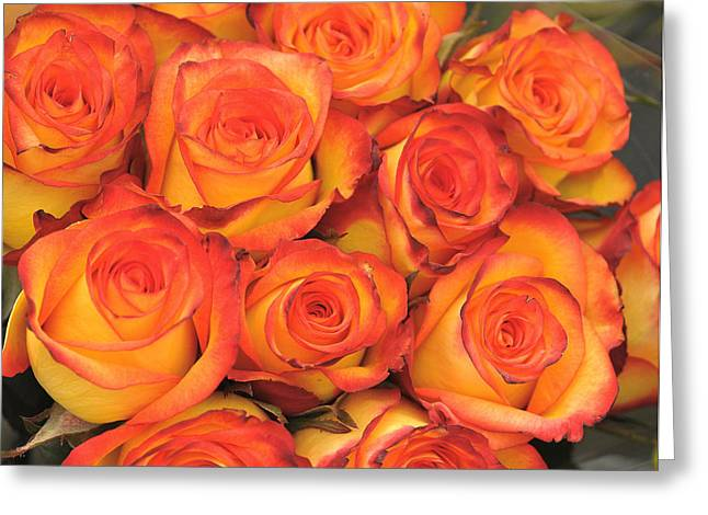 Harvest Roses Greeting Card by JAMART Photography