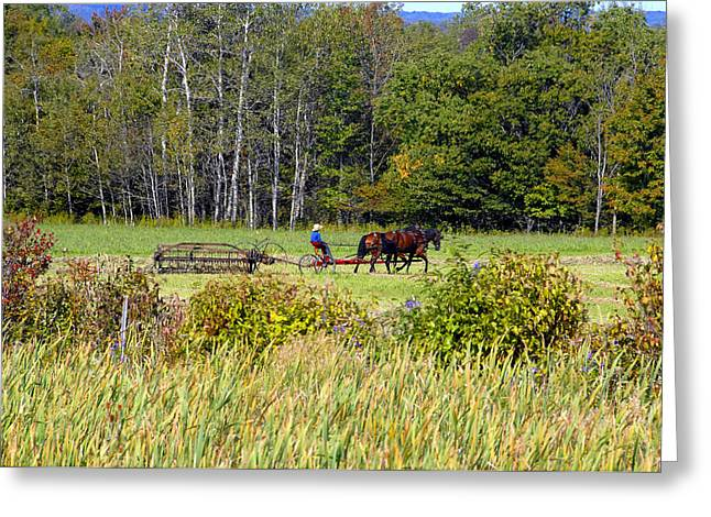 Harvest Time Greeting Card by David Lee Thompson