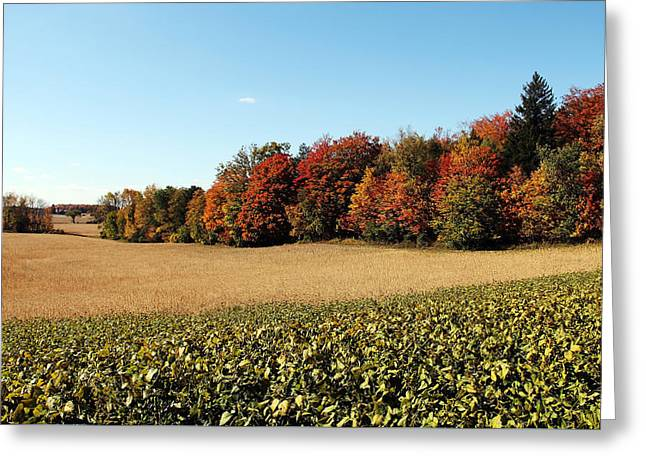 Harvest Time Greeting Card by Debbie Oppermann