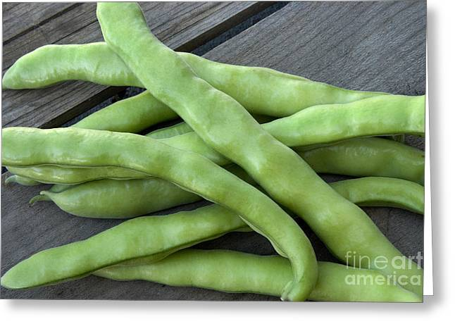 Harvested Fava Beans Greeting Card