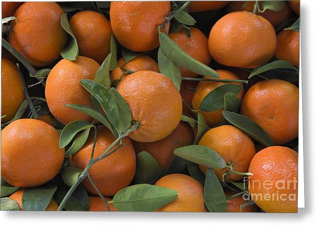 Harvested Mandarins Greeting Card by Inga Spence