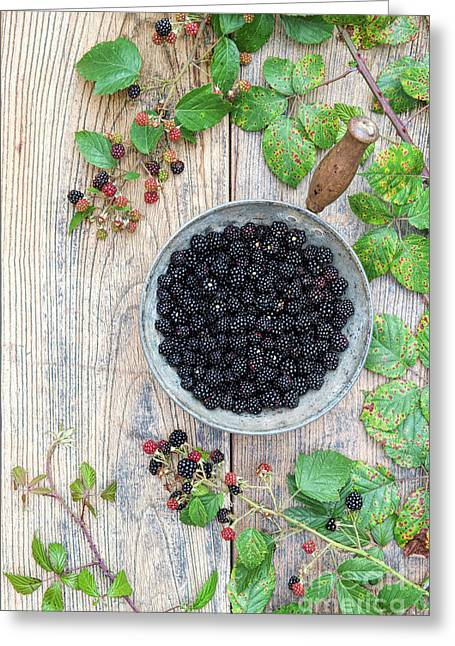 Harvested Wild Blackberries  Greeting Card by Tim Gainey