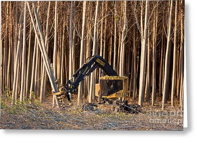 Harvesting Hybrid Poplar Trees Greeting Card by Inga Spence