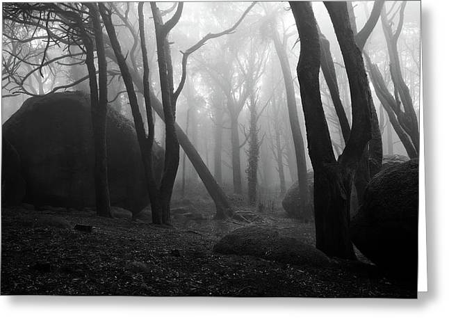 Greeting Card featuring the photograph Haunted Woods by Jorge Maia