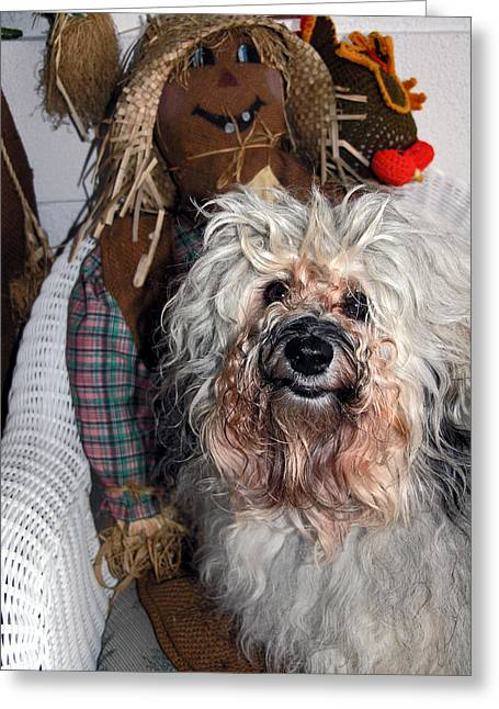 Greeting Card featuring the photograph Havanese Cutie by Sally Weigand