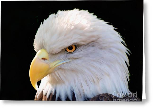 Greeting Card featuring the photograph Have My Eye On You by Ken Frischkorn