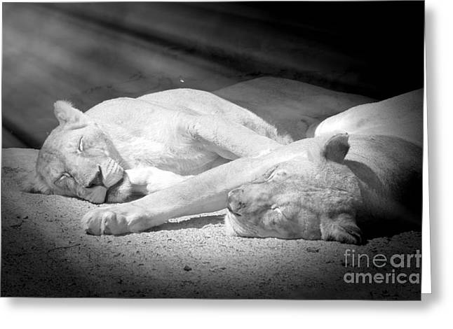 Have No Worries... Sleeping Time Greeting Card by Stefano Senise