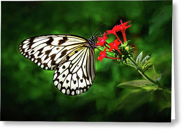 Haven't You Noticed The Butterflies? Greeting Card