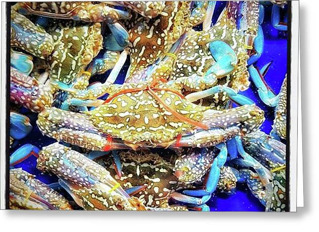 Having A Crabby Trip. But In A Good Greeting Card by Mr Photojimsf