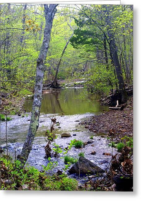 Haw Creek Greeting Card by Marty Koch