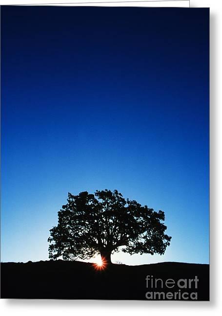Hawaii Koa Tree Greeting Card by Carl Shaneff - Printscapes