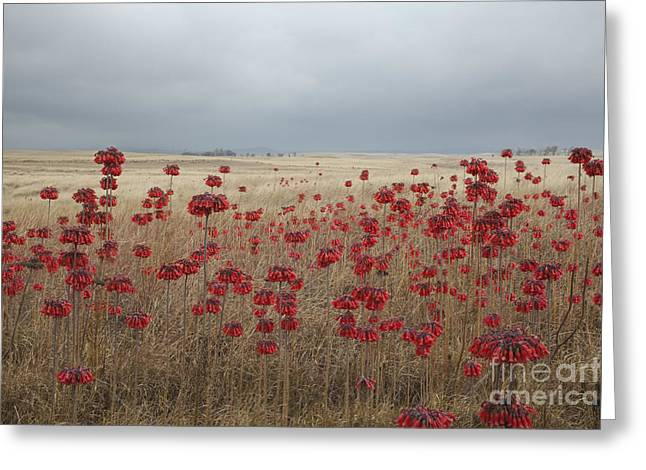Hawaii Landscape With Red Flowers Greeting Card