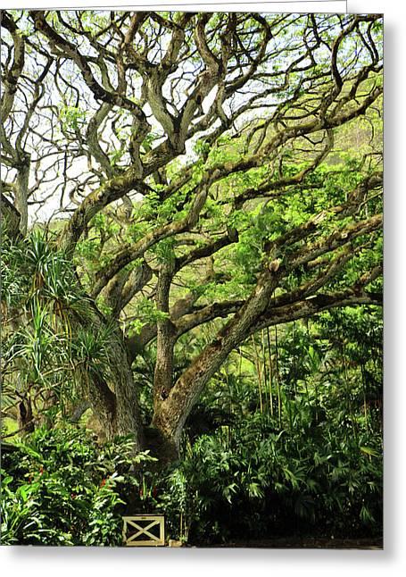 Hawaii Tree-bard Greeting Card