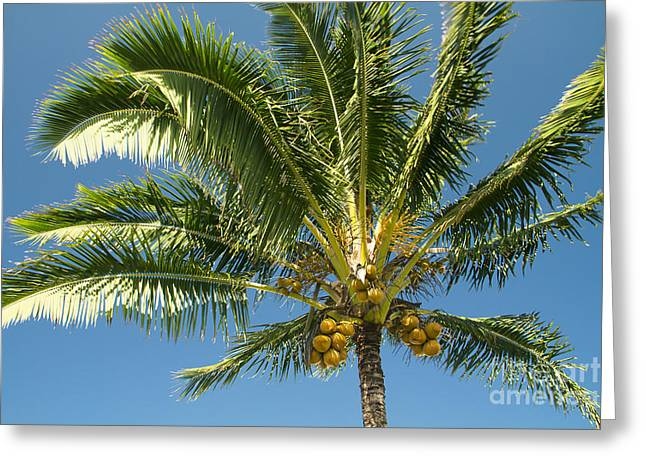 Hawaiian Coconut Palm Tree Greeting Card