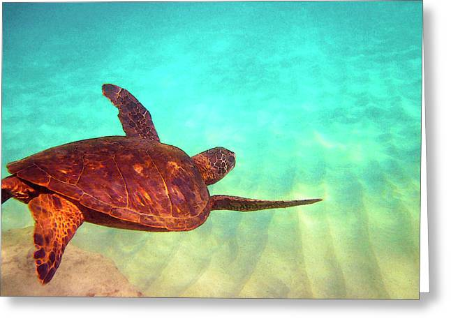 Hawaiian Green Sea Turtle Greeting Card by Bette Phelan