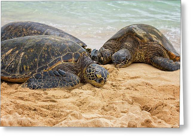 Hawaiian Green Sea Turtles 1 - Oahu Hawaii Greeting Card