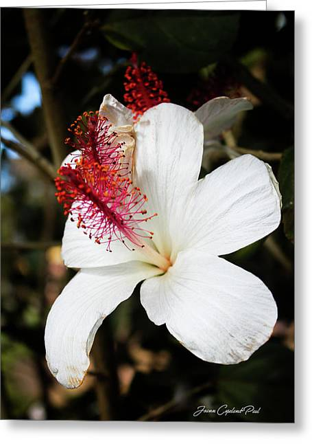 Greeting Card featuring the photograph Hawaiian Hibiscus  by Joann Copeland-Paul