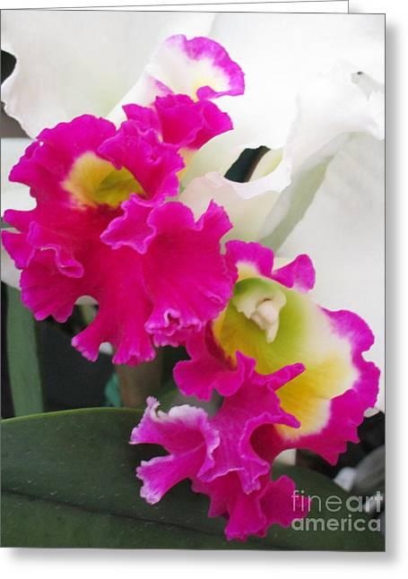 Hawaiian Orchid 10 Greeting Card by Randall Weidner