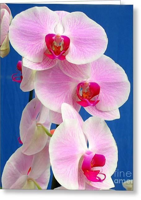 Hawaiian Orchid 12 Greeting Card by Randall Weidner