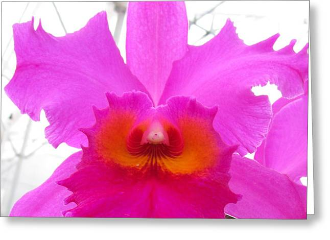 Hawaiian Orchid 16 Greeting Card