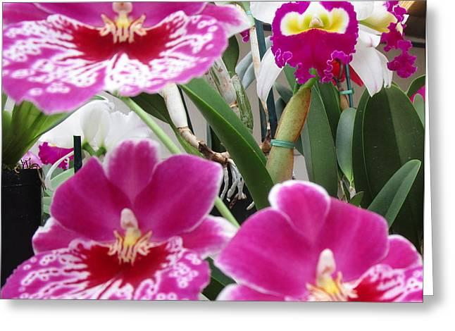 Hawaiian Orchid 5 Greeting Card by Randall Weidner