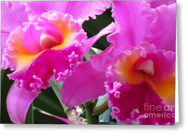Hawaiian Orchid 6 Greeting Card
