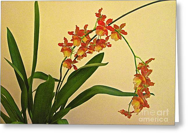 Greeting Card featuring the photograph Hawaiian Orchid Spray by Bette Phelan