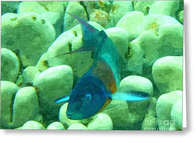 Hawaiian Reef Fish Greeting Card