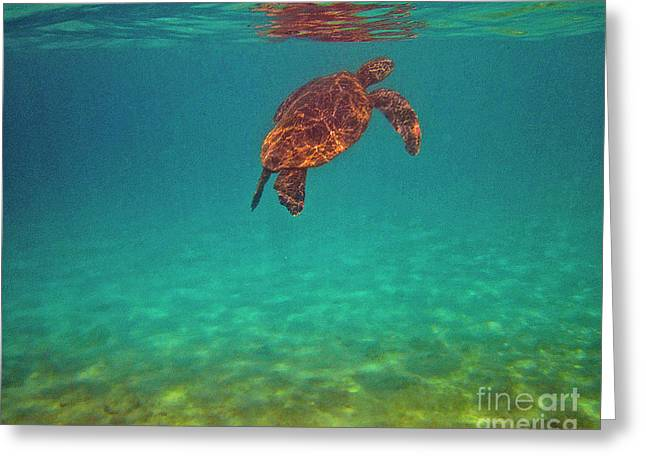Hawaiian Sea Turtle - Floating Greeting Card