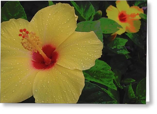 Hawaiian Sunrise Greeting Card by JAMART Photography