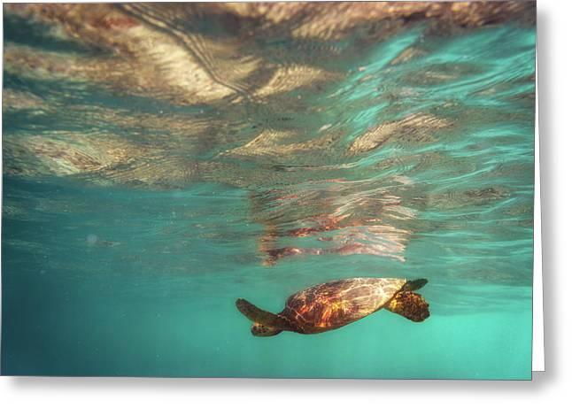 Hawaiian Turtle Greeting Card
