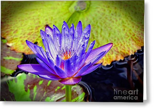 Hawaiian Water Lily Greeting Card by Sue Melvin