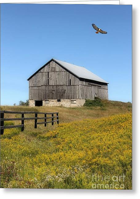 Hawk And Barn Greeting Card by Anthony Djordjevic