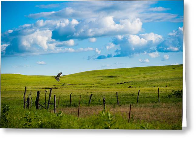 Hawk And Flint Hills Greeting Card