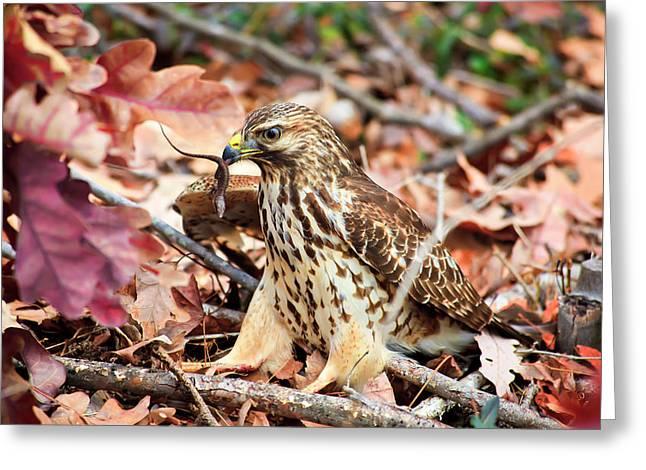 Hawk Catches Prey Greeting Card