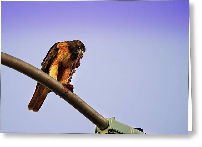 Hawk Eating Greeting Card