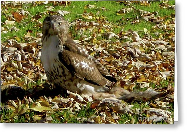 Hawk Falling Leaves Greeting Card