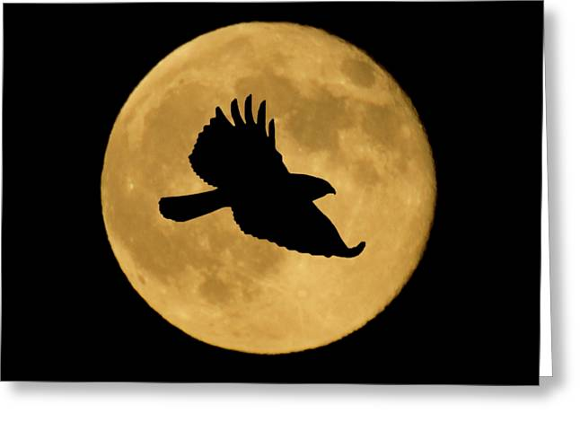 Greeting Card featuring the mixed media Hawk Flying By Full Moon by Shane Bechler