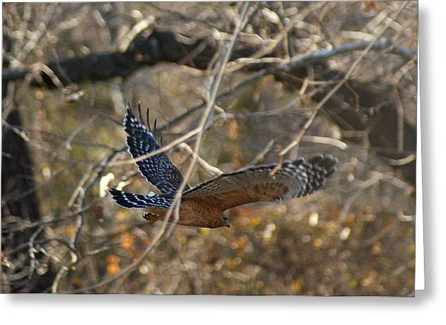 Greeting Card featuring the photograph Hawk In Flight by Rick Friedle