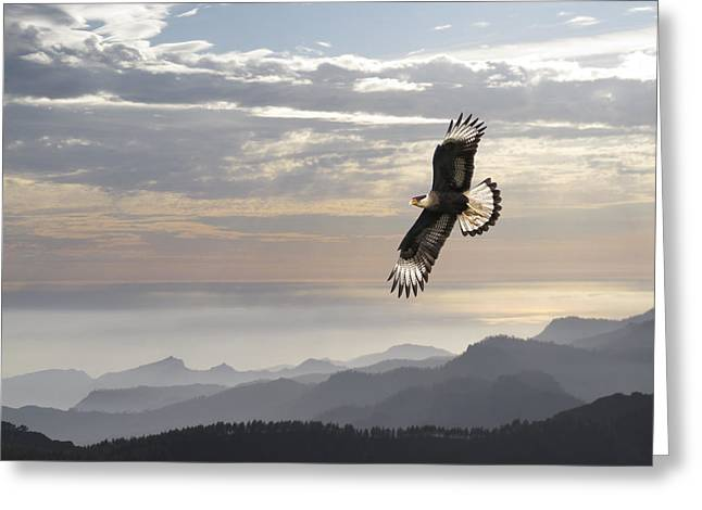 Hawk Mountains Greeting Card by Daniel Hagerman