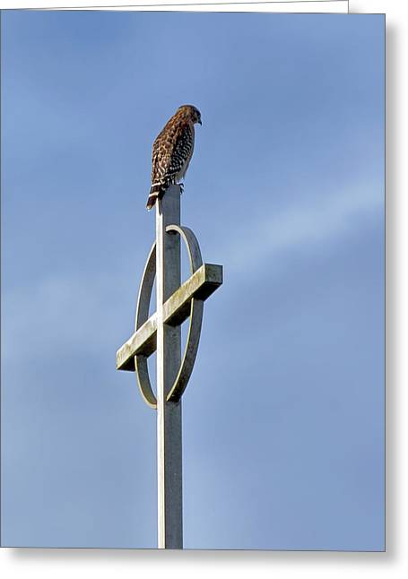 Greeting Card featuring the photograph Hawk On Steeple by Richard Rizzo