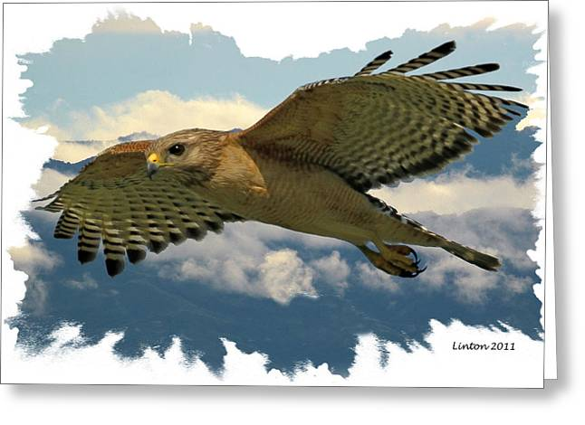 Hawk On The Wing Greeting Card